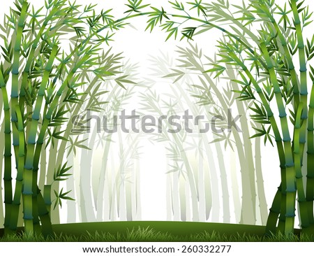 bamboo forest when it full of