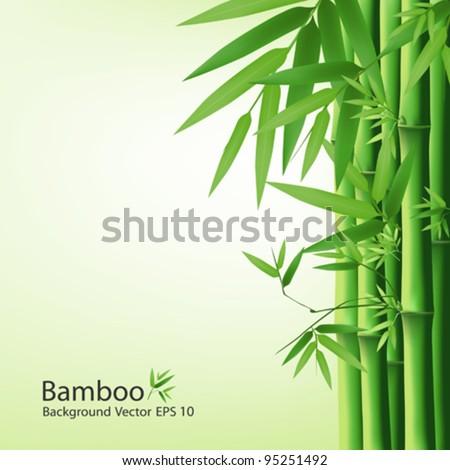 Bamboo green leaf, vector illustration