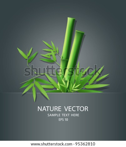 Bamboo idea in package, vector illustration