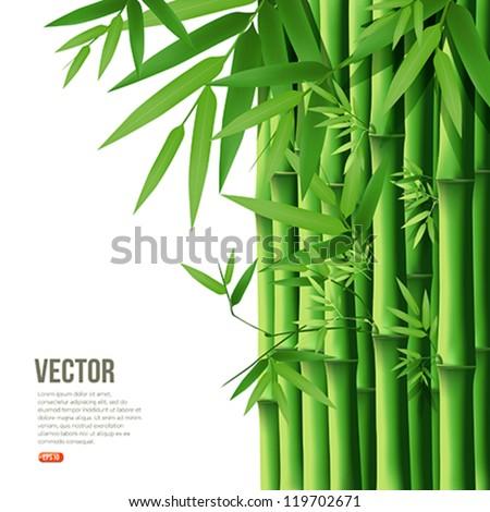 stock-vector-bamboo-vector-illustration