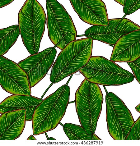 banana leaf pattern on white background #436287919