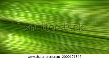banana leaf texture  close up