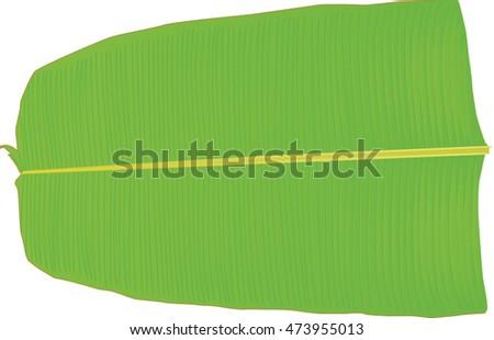 Free Banana Leaf Vector Illustration Download Free Vector Art