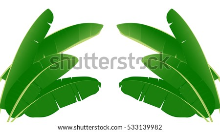 Banana Leaf Vector Isolated On White Background