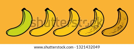 Banana ripeness chart. Set of different color bananas, green underripe, barely ripe, ripe very ripe and brown over ripe. isolated on back ground - Fruit Vector