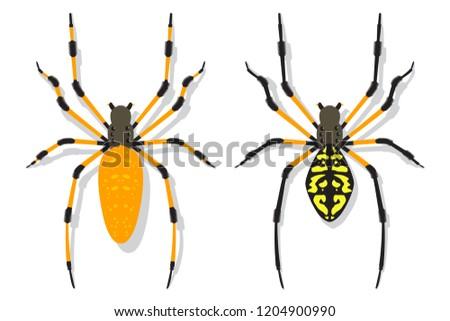 banana spider vector cartoon