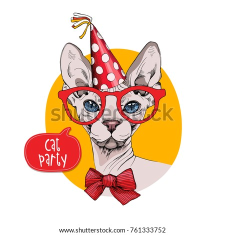 bandit sphynx cat in a red
