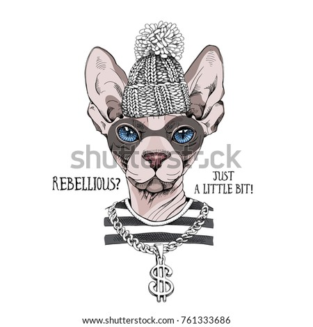 bandit sphynx cat in a striped