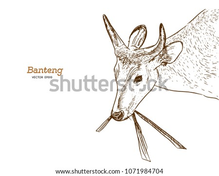 banteng  red bull hand draw