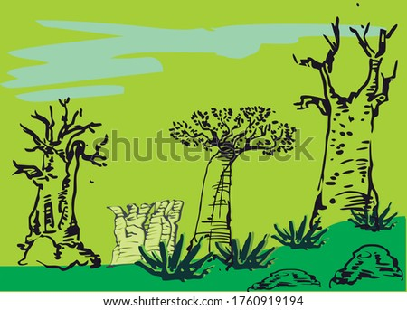 baobab trees are the largest