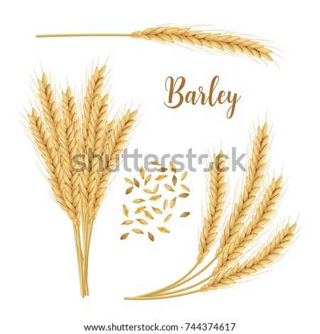 Barley, oat set. Plant, spikelet with ears, grains, seeds, sheaf. 3d icon vector. For design, illustration, decoration, cooking, bakery, tags, labels, textile