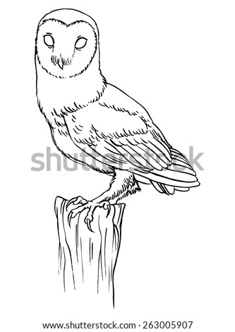Barn owl - linear vector hand drawing