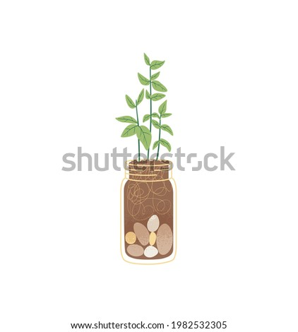 basil grows in a jar  vector