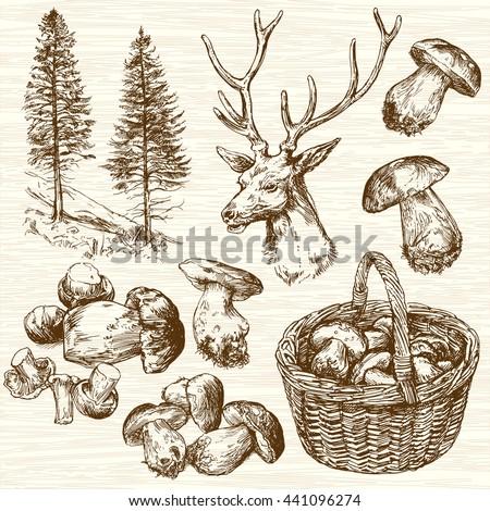 basket of mushrooms in forest