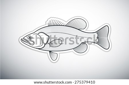 bass fish outline vector illustration