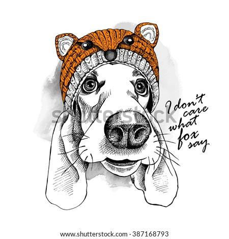 basset hound dog in a fox