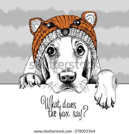 basset hound in a fox muzzle