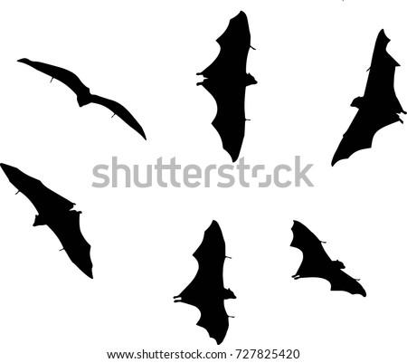 Bats Vector Vectored Flying
