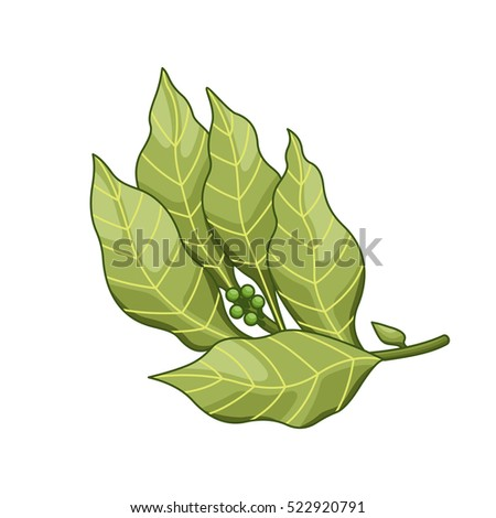 bay leaf vector colored