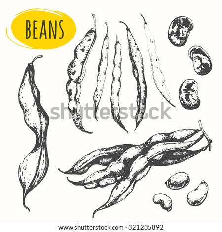 Beans and legumes. Set of hand drawn food. Fresh organic products. Vector illustration with sketch pods of asparagus. Black and white.