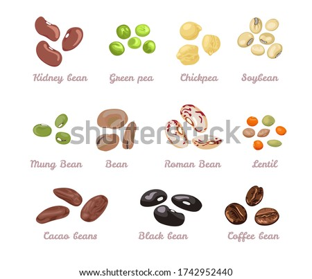 Beans and legumes set. Vector illustration of beans, green peas, chickpeas, mung bean, soybeans, coffee beans, cocoa beans and lentils in cartoon flat style. Organic healthy food.