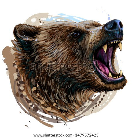 bear color portrait of a angry