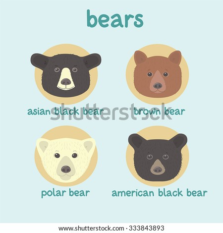 bear faces vector set  asian