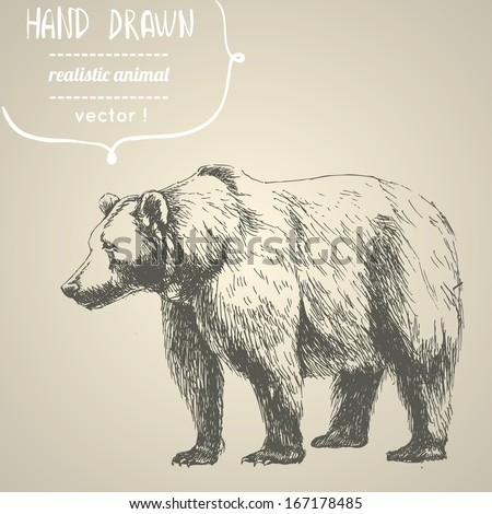 bear hand drawn vector