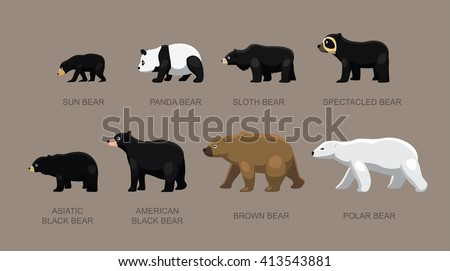 bear sizes cartoon vector