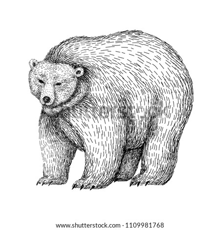 bear sketch style. hand drawn...