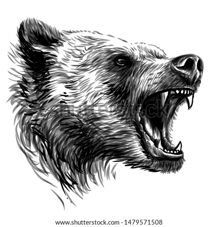 bear sketchy portrait of a