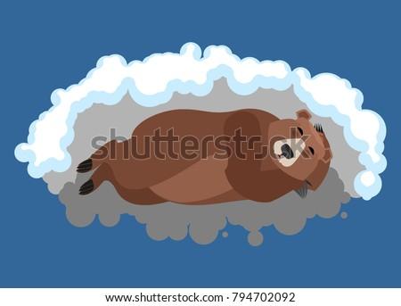 bear sleeps in den grizzly