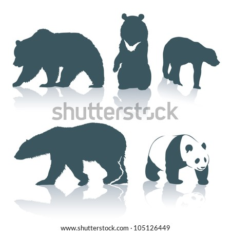 bear species   vector
