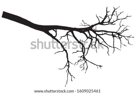 beautiful bare branch tree