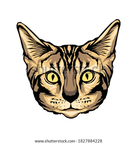 beautiful bengal cat face  for