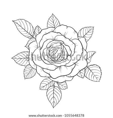 beautiful black and white bouquet rose and leaves. Floral arrangement isolated on background. design greeting card and invitation of the wedding, birthday, Valentine s Day, mother s day, holiday.