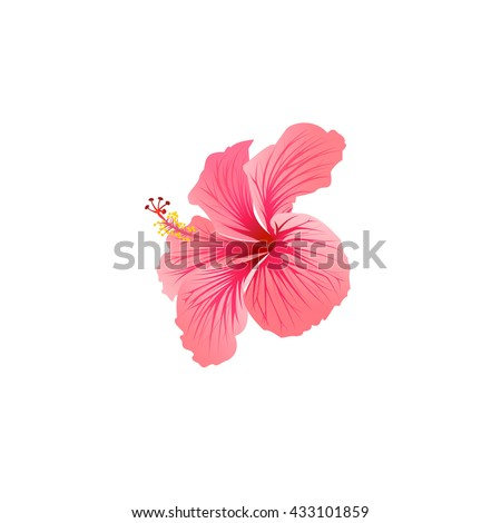 beautiful blooming hibiscus, tropical flower, hibiscus Icon Vector, hibiscus Icon Flat, hibiscus Icon Sign, hibiscus Icon Logo, hibiscus Icon EPS, hibiscus Icon App