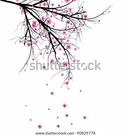 beautiful blossom cherry