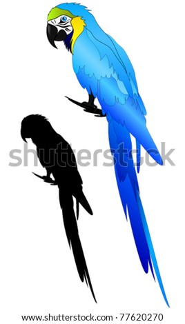 beautiful Blue-and-yellow Macaw parrot vector