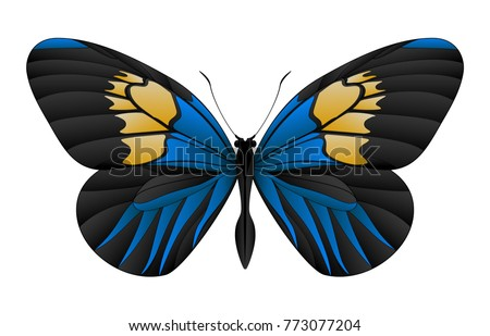 beautiful butterfly isolated on