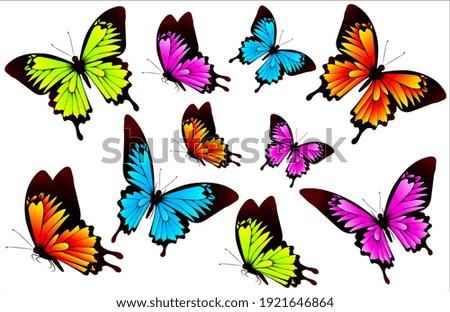 beautiful color butterflies set