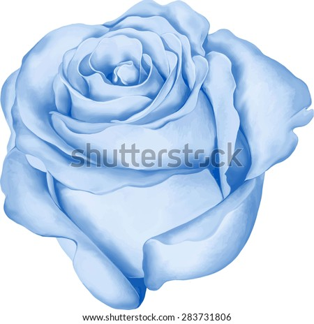 beautiful colorful blue rose