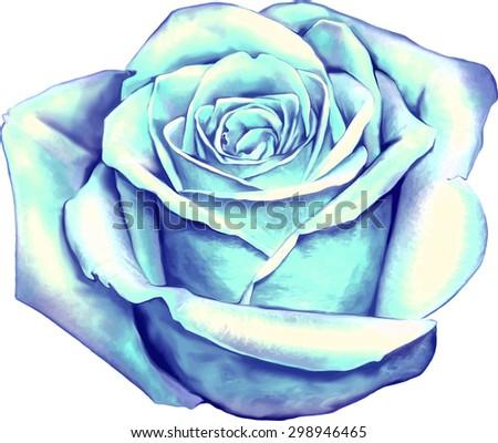beautiful colorful blue rose