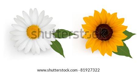 Beautiful daisy and sunflower with leaves. Vector.