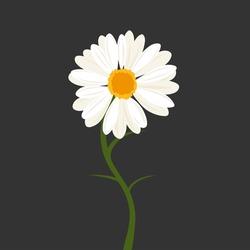 Beautiful daisy flower on dark background. Aesthetic chamomile vector for invitation, wedding decor, postcard, poster, web design, etc.