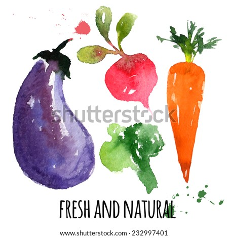 beautiful delicious vegetables, hand drawn watercolor and brush on paper - paint, stain, splash - eggplant, beet, carrot, broccoli - farm concept, labels, ecology design - vector illustration