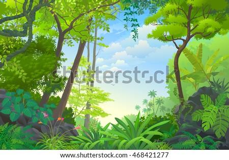 beautiful dense rain forest