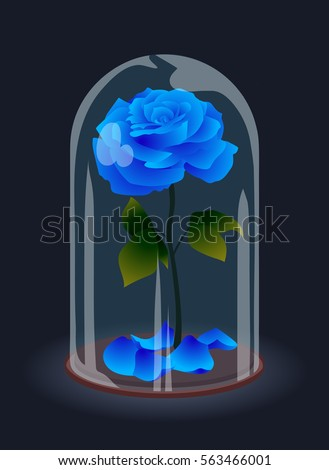 beautiful elegant blue rose