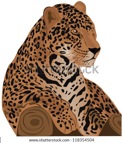 Beautiful feline illustration. Jaguar (Panthera onca). Vector