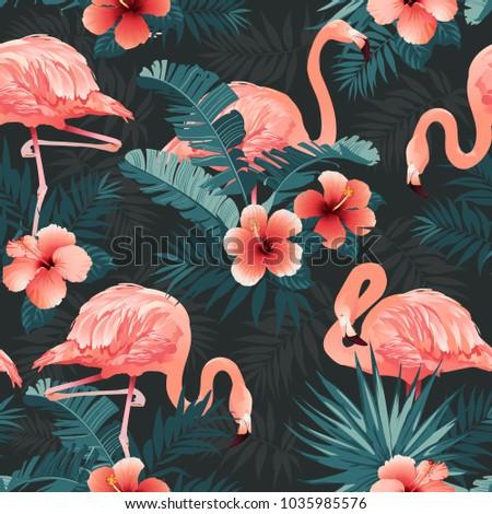beautiful flamingo bird